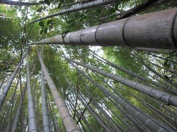 竹の子堀1.jpg