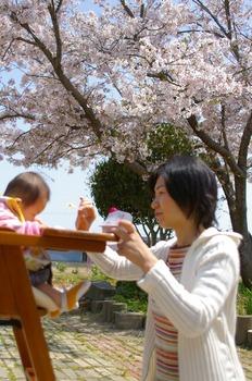 長洲花見3.jpg